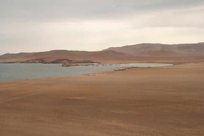 Paracas 313a